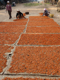 Shrimp Drying in Village on Tonle Sap Lake Photographic Print by Ariadne Van Zandbergen
