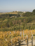 Vineyards and Church on Top of Hill Photographic Print by Richard Nebesky