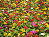 Colourful Flowers at Ho Chi Minh City's Zoo and Botanic Gardens Photographic Print by Anders Blomqvist