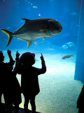 Excited School Children Gazing at Fish at Osaka Aquarium Fotografie-Druck von Antony Giblin