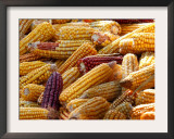 View of Ears of Organic Corn in Bussunaritz, Southwestern France, Saturday, October 28, 2006 Framed Photographic Print by Bob Edme