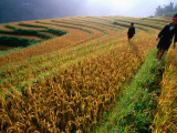 Ethnic Black H&#39;Mong Live in Mountains of North, Cultivating Corn, Rice and Medicinal Plants Photographic Print by Stu Smucker
