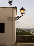 Pigeons Above Street Lamp in Parque De Las Palomas in Old San Juan Photographic Print by Steven Greaves