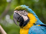 Macaw Photographic Print by Brian Cruickshank