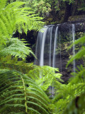 Russell Falls Through Ferns Photographie par Andrew Watson