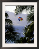 A Person on a Parasail is Framed by Palm Trees Framed Photographic Print