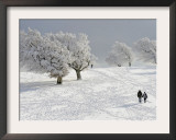 Strollers Passing Snow Covered Trees on the Mountain Schauinsland in the Black Forest , Germany Framed Photographic Print