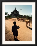 A Young Burmese Boy Tends His Family's Cows Near the Thatbinnyu Temple Framed Photographic Print