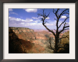 A Tree Frames a Spectacular View of Arizona's Grand Canyon Framed Photographic Print