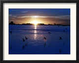The Sun Sets as Sea Gulls Flies Over Flooded Argentina's Pampas Framed Photographic Print