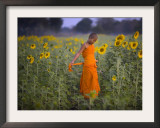Novice Buddhist Monk Makes His Way Through a Field of Sunflowers as 10,000 Gather, Thailand Framed Photographic Print