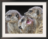Meerkats Seated by a Heating Lamp in a Zoo in Freiburg , Southern Germany Framed Photographic Print