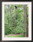 Jack, a 15-Pound Cat, Sits under a Treed Black Bear in a Backyard in West Milford, New Jersey Framed Photographic Print