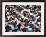 Beijing Olympics Opening Ceremony, Performers Dancing, Beijing, China Framed Photographic Print