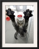 Cat Stretches on a Glass Door in the Animal Shelter in Berlin Framed Photographic Print