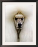 Mexico World Dog Show 2007 Framed Photographic Print by Eduardo Verdugo
