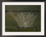 The Work of a Spider is Highlighted by the Morning Sun Framed Photographic Print