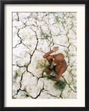 An Indian Farmer Sits in His Dried up Field in Hanumanganj, India Framed Photographic Print