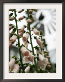 Chelsea Flower Show, London, England Framed Photographic Print by Sang Tan