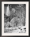 Snow-Covered Trees Framed Photographic Print