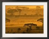 Herbivores at Sunrise, Amboseli Wildlife Reserve, Kenya Framed Photographic Print by Vadim Ghirda