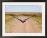 Karibu over a Dirt Road, Masai Mara Wildlife Reserve, Kenya Framed Photographic Print by Vadim Ghirda