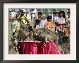 Tourists Gather to Watch Long-Tailed Macaques During an Annual Festival to Honor Them Framed Photographic Print by David Longstreath