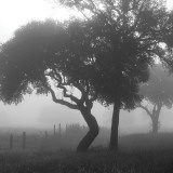 Texas Hill Country Trees in Fog Wallstickers