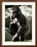 Mother Gorilla Julia Framed Photographic Print