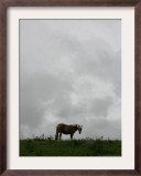 Horse Stands on a Rainy Meadow, St. Peter, Germany Framed Photographic Print by Winfried Rothermel