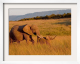 Elephant and Offspring, Masai Mara Wildlife Reserve, Kenya Framed Photographic Print by Vadim Ghirda