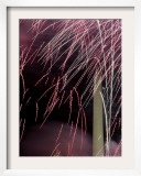 Fireworks Explode Over the Capitol and Washington Monument Framed Photographic Print