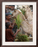 Bangladeshi Children Feed Sacrificial Camel Framed Photographic Print by Pavel Rahman