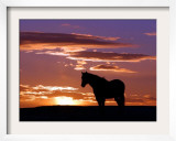 A Wild Horse Lingers at the Edge of the Badlands Near Fryburg, N.D. Framed Photographic Print by Ruth Plunkett