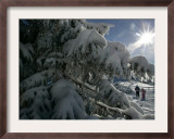 Hikers Walk on a Path Beside Snow Covered Trees Framed Photographic Print by Christof Stache