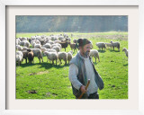 A Shepherd Stands by His Sheep in Miclosoara, Romania, October 2006 Framed Photographic Print by Rupert Wolfe-murray