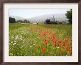 Many States Plant Wildflowers Along Busy Roadsides or Inside Interstate Medians Framed Photographic Print by Dean Fosdick