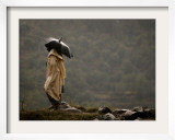 A Pakistani Man Tries to Protect Himself from Heavy Rain Framed Photographic Print