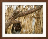 A Sudanese Girl Plays Inside a Thatched Hut at the Refugee Camp of Zamzam Framed Photographic Print