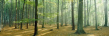 Woodlands Near Annweiler, Germany Wallstickers af Panoramic Images