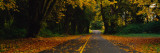 Autumn Leaves on the Road, Olympic Peninsula, Washington State Wall Decal by  Panoramic Images