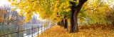 Autumn Scene, Munich, Germany Wallstickers af Panoramic Images