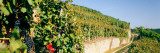 Gravel Road Passing Through Vineyards, Germany Wall Decal