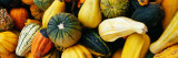 Variety of Gourds, Close Up Wall Decal