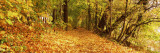 Autumnal Trees in a Park, Isar Trail, Munich, Bavaria, Germany Wall Decal by  Panoramic Images