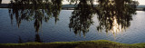 Reflection of Tree in a River, Middleton Place, Charleston, South Carolina Wall Decal by  Panoramic Images