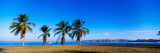 Palm Trees On The Beach, Puerto La Cruz, Anzoategui State, Venezuela Wall Decal by  Panoramic Images