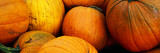 Pile of Harvested Pumpkins, Close Up Decalcomania da muro