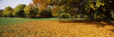 Autumnal Trees in a Park, English Garden, Munich, Bavaria, Germany Wall Decal by  Panoramic Images