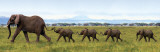 Elefanten - In einer Reihe Kunstdruck